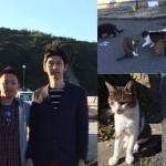 島の猫から力を抜いた生き方を教えてもらった【猫の島田代島・写真と感想】