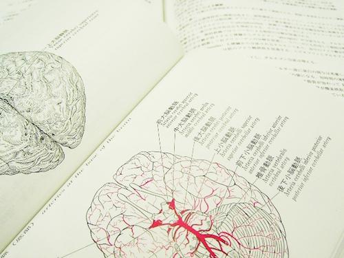 起業準備に脳の仕組みを活かす