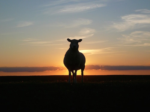 やりたいことがわからない彷徨える羊